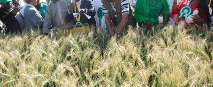 Nigerian-Wheat-Production